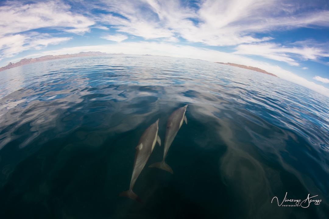 Baha-Dolphins scene