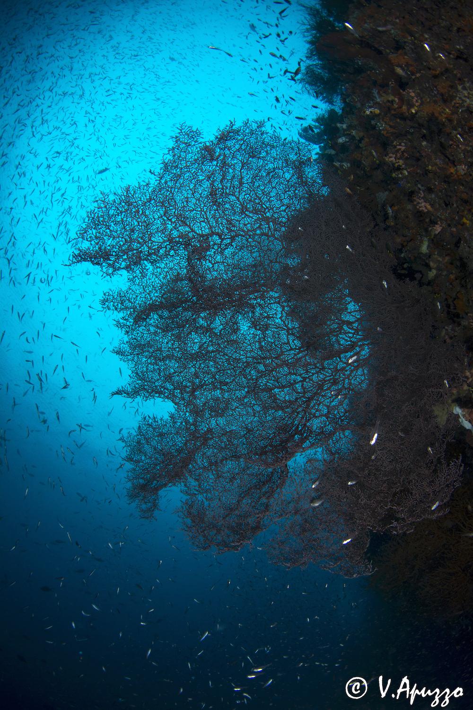 Reef scene in shadow