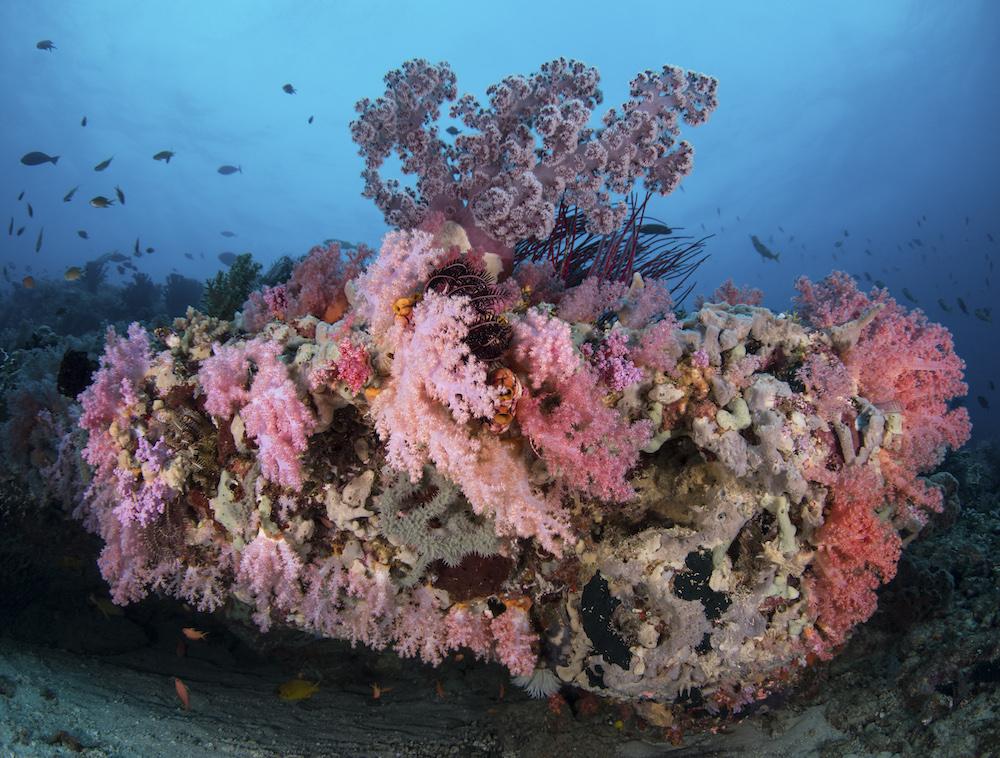Triton-Bay Reef